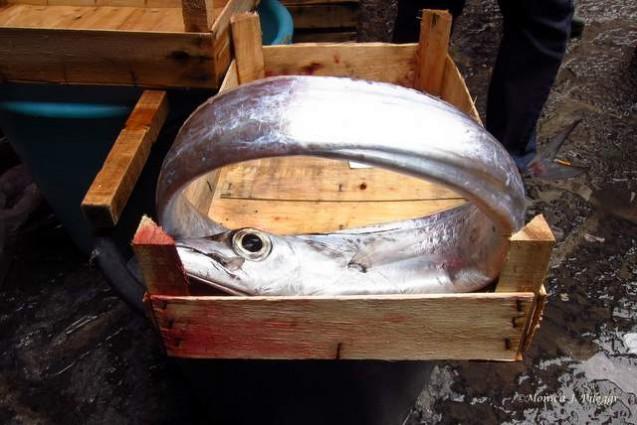 catania-fish-market1